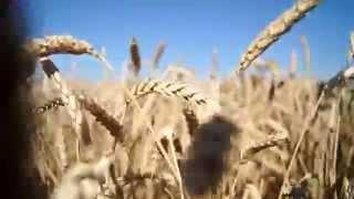 Download Пшеница колосится... Mp3 and Videos