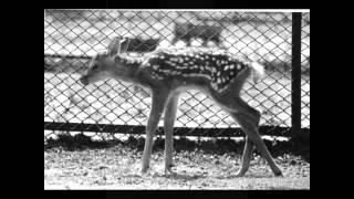 Доклад: Московский зоопарк