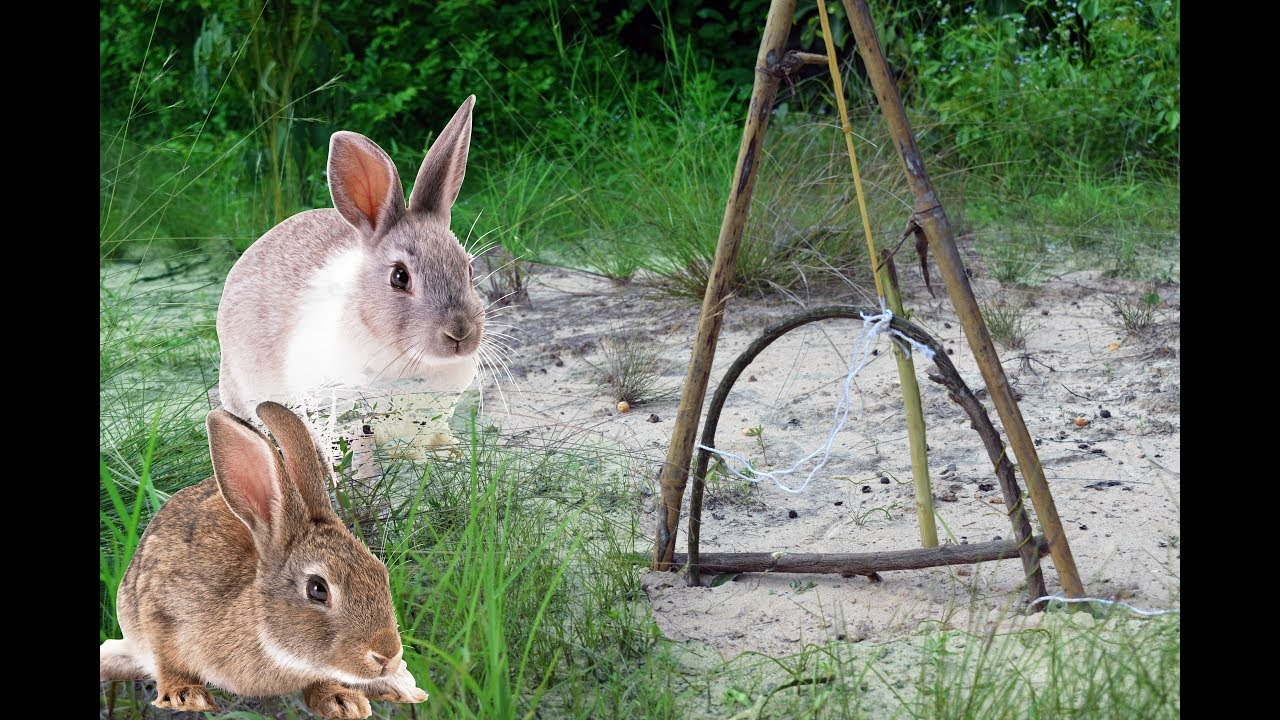 How to Make a Rabbit Snare foto