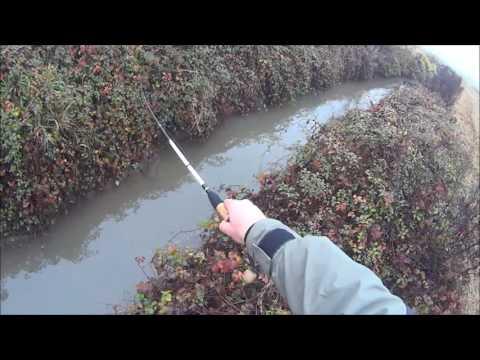 Il fosso con più pesci che acqua