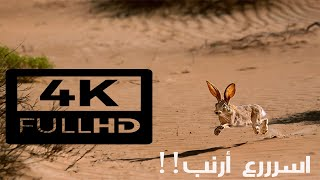 مقناص ارنب 1  تصوير جوي ✈