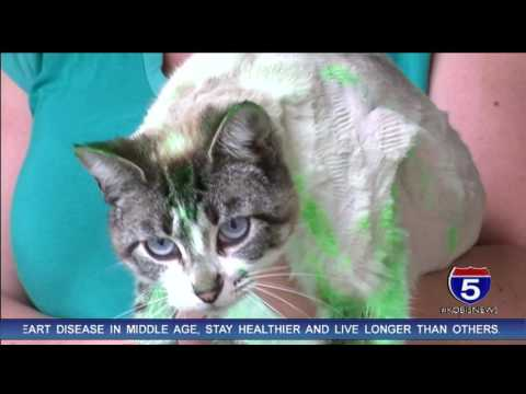 Painted cat sparks animal cruelty investigation