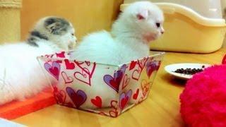 Pet Shop in Japan