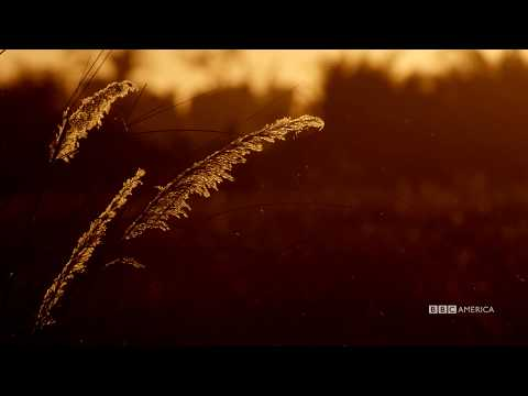 Visual Soundscapes - Grasslands | Planet Earth II | BBC America
