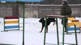 Будни армейской собаки.