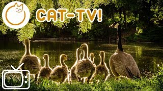 NEW Relaxing Cat Music and TV! 15 Hours of Entertainment!