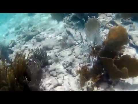 School of Parrot Fish