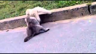 Коты Дерутся, Подборка Кошачих драк - Разборки Уличных Котов