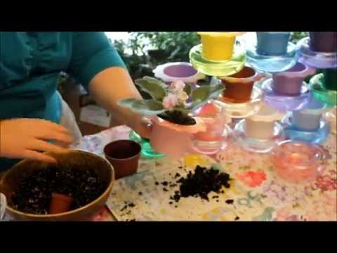 Planting An African Violet In A Dandy Pot Youtube
