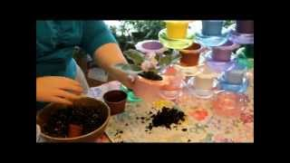 Planting An African Violet In A Dandy Pot