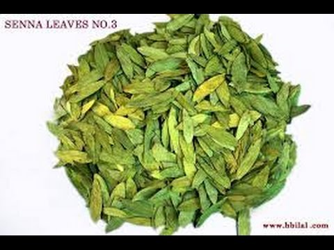 Image result for DAWADA BAWASIRKA(SENNA LEAF)