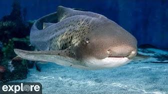 Shark Lagoon Cam powered by EXPLORE.org