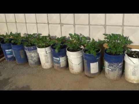 ТЕПЛИЦЫ из поликарбоната, выращивание в теплице отзывы в Беларуси .