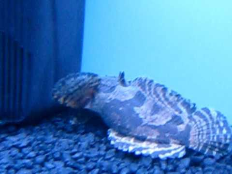 Stone Fish In Motion