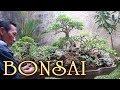 Bonsai Trees in Beautiful Landscape Style by Tedy Boy Indonesia / Trailer