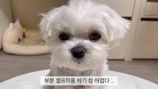 [브이로그] 말티즈 | 강아지 일상 | 강아지 미용 |…