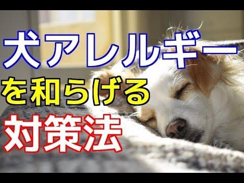 愛犬のための知識 犬アレルギーを和らげる対策法 犬を知る Youtube