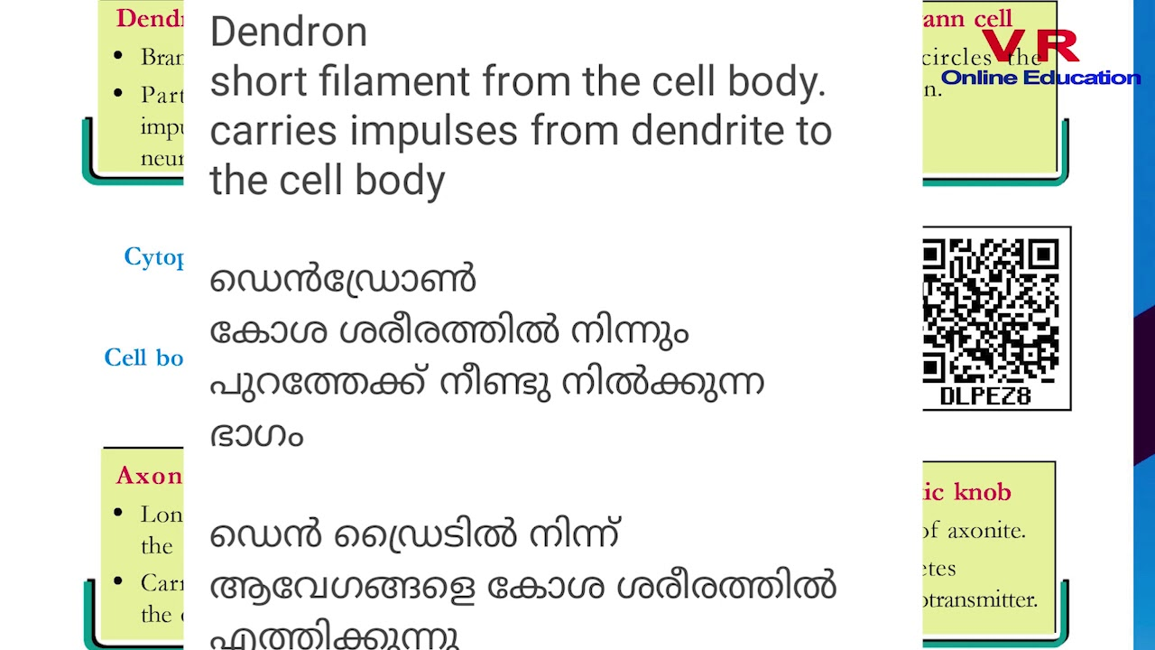 Biology | class 10 | sslc | neuron | questions and answers ...