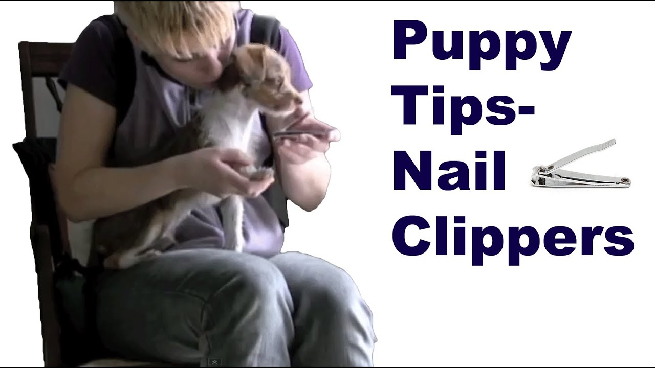 Dog training tips You can use human nail clippers with puppies