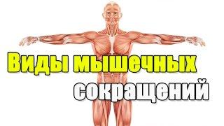 [Пособие тренинг] Виды мышечных сокращений и мышечного отказа.