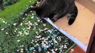 Кошка рвет коробку зубами! СМЕХОТА!