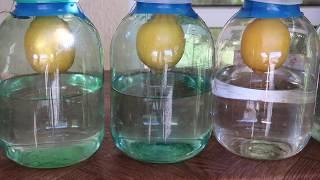 Лимонная водка (Висельник)