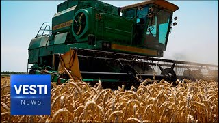 Kuban-Quality Gold Standard Grain! Russia Has Become World Agricultural Leader Again