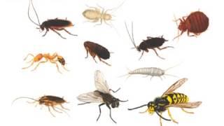 Опасные насекомые в доме