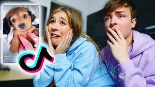 THE BEST ANIMAL TIK TOKS! - My Girlfriend Reacts