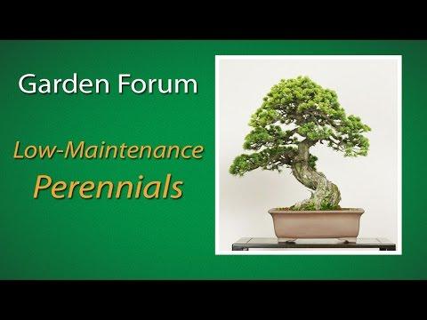 Low maintenance perennials youtube for No maintenance perennials