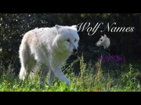 Wolf Names 🐺