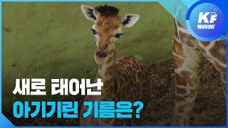 '코로나19 못 피한' 동물원 동물 풍경 / KBS뉴스…