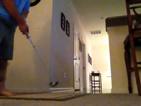Cute Puppy Dog Chases Golf Ball