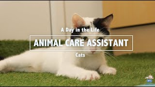 A Day in the Life of a RSPCA Animal Care Assistant: Cats