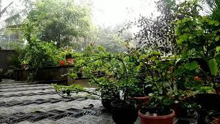 Trending Vanil Chandrika Song 💕 ft Nature Luca Malayalam Movie Song