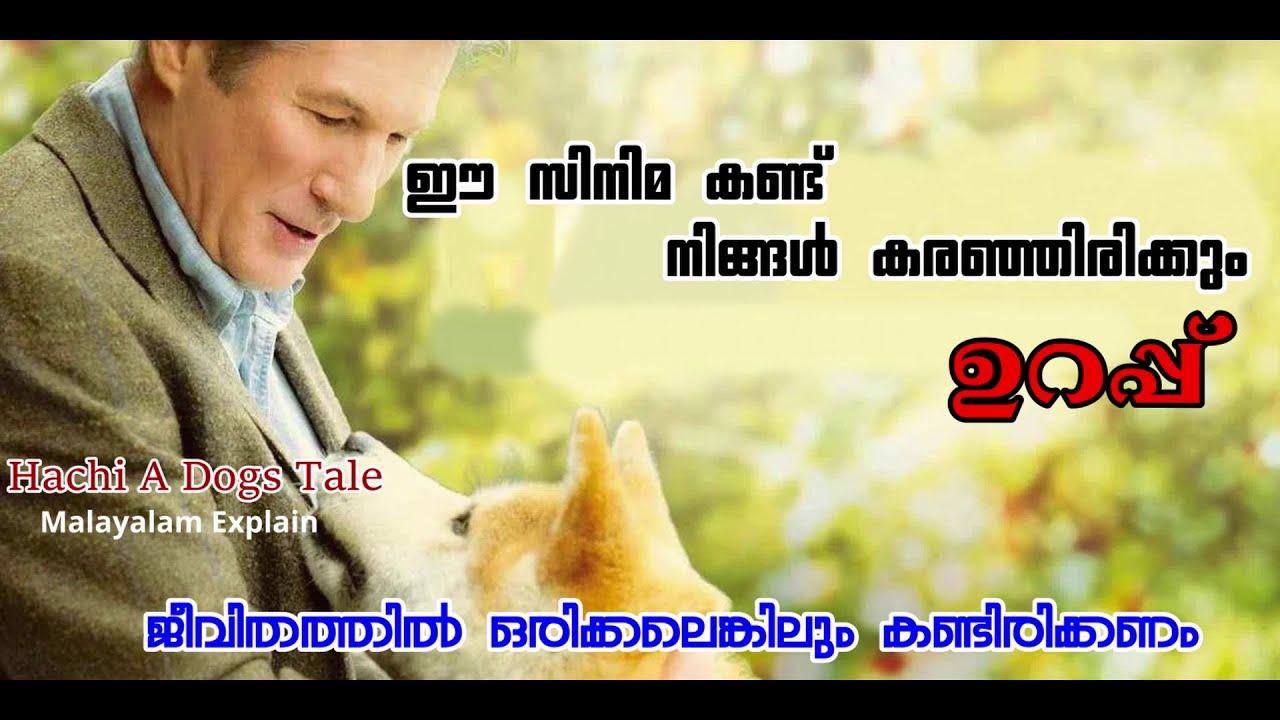 Download Hachi A Dog's Tale Movie Explain Malayalam   Cinima Lokam...