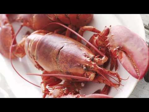 Lobster: Where to Find the Best Lobster