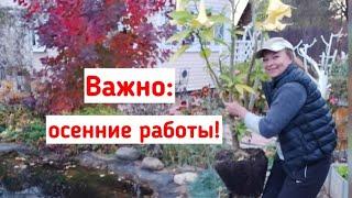 Осенние работы в саду и огороде! Подготовка к зиме, что делать с листьями, сидераты, плодовый сад