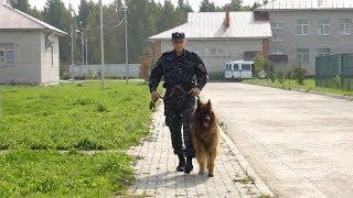 Сергей Непряхин - Человек и собака