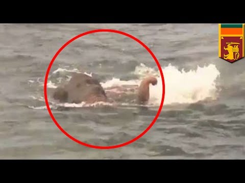 Elephant rescue: Sri Lanka navy saves elephant swimming 9 MILES from the shore - TomoNews