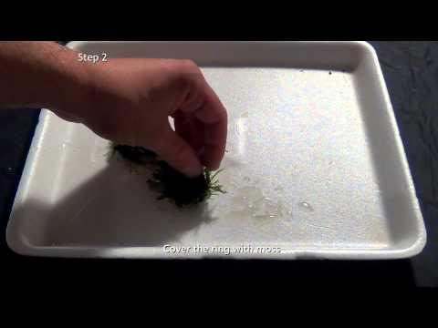 Green Lush How to's: moss decoration