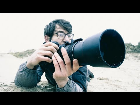 Top value Nikon lens for wildlife photography -  The 300 F4. Photographing Seals.