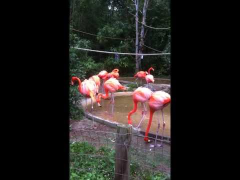 A Flamingo's Noise