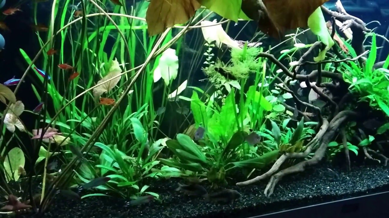 Planted Aquarium Low Tech Juwel Rio 240l Youtube