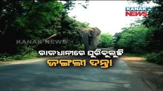 Wild Elephant Strays Into Jaydev Vatika In Bhubaneswar