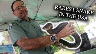 Meet The Eastern Indigo Snake: Rarest Snake In The United States