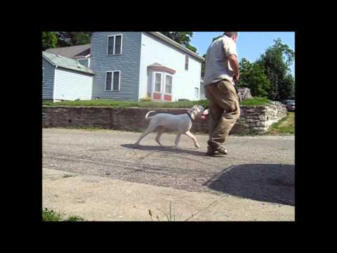 Dog training Bromley - Dog Obedience Courses & Tips Bromley UK