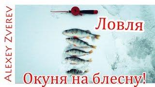 Ловля ОКУНЯ. Окунь на БЛЕСНУ! Зимняя рыбалка.