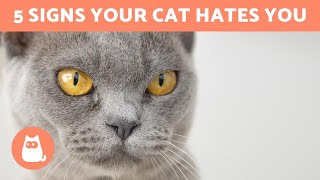 5 Signs Your CAT HATES YOU 😾 - Understanding Feline Aggression
