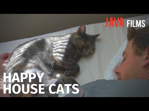 How to Keep Your House Cat Happy | Cat People Documentary